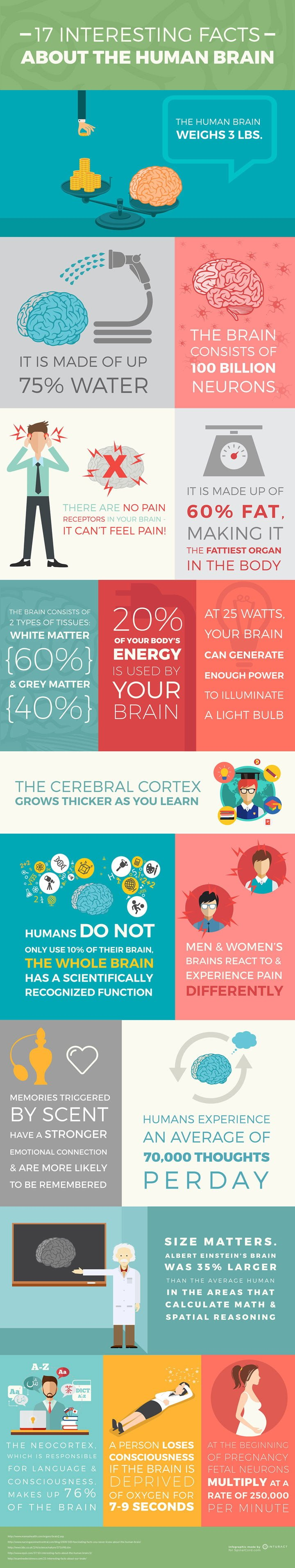 17 Interesting Facts About The Human Brain Infographic