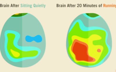 A Little Exercise Improves Blood Flow To The Brain F