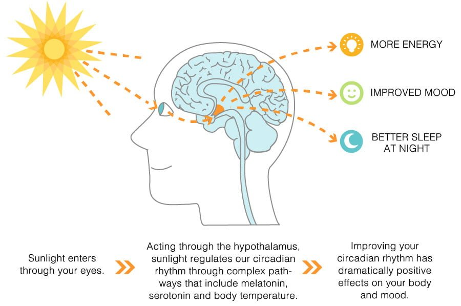 Benefits of Sunlight Infographic
