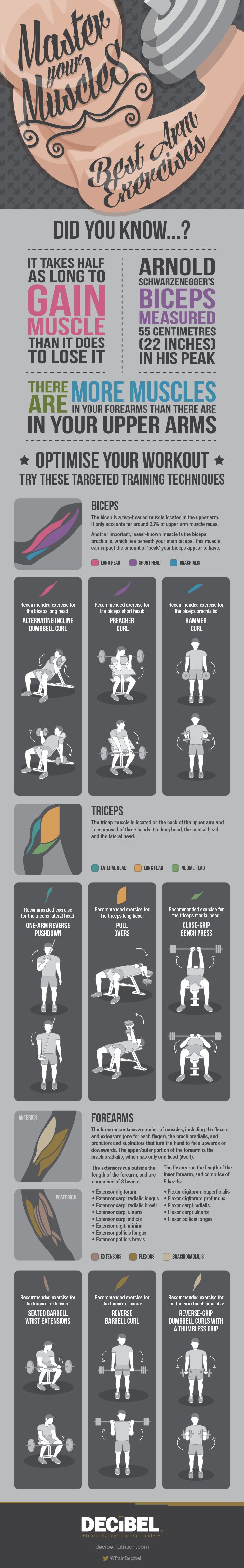Best Arm Exercises Infographic