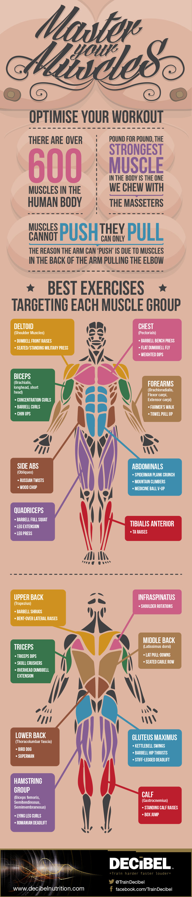 Best Exercises For Each Muscle Group Infographic