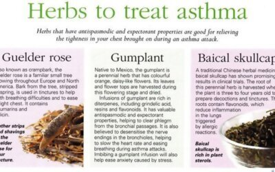 Herbs To Treat Asthma Infographic F