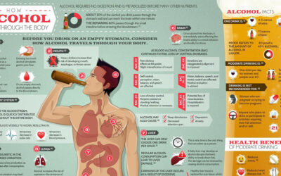 How Alcohol Travels Through The Body Infographic F
