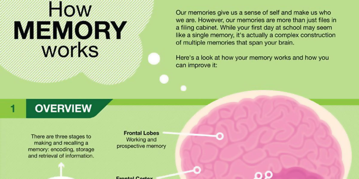 How Memory Works Infographic F