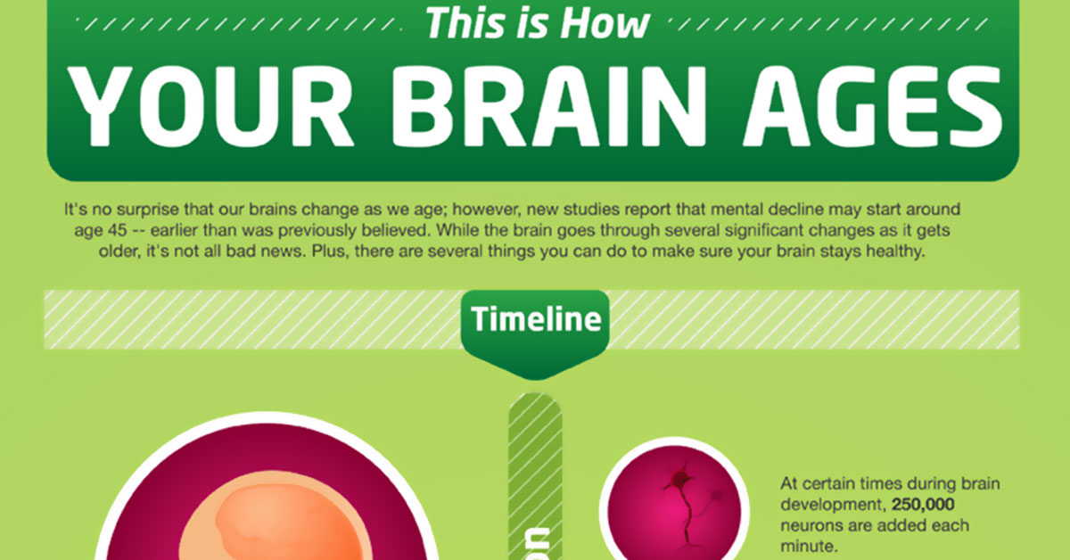 How Your Brain Ages Infographic F
