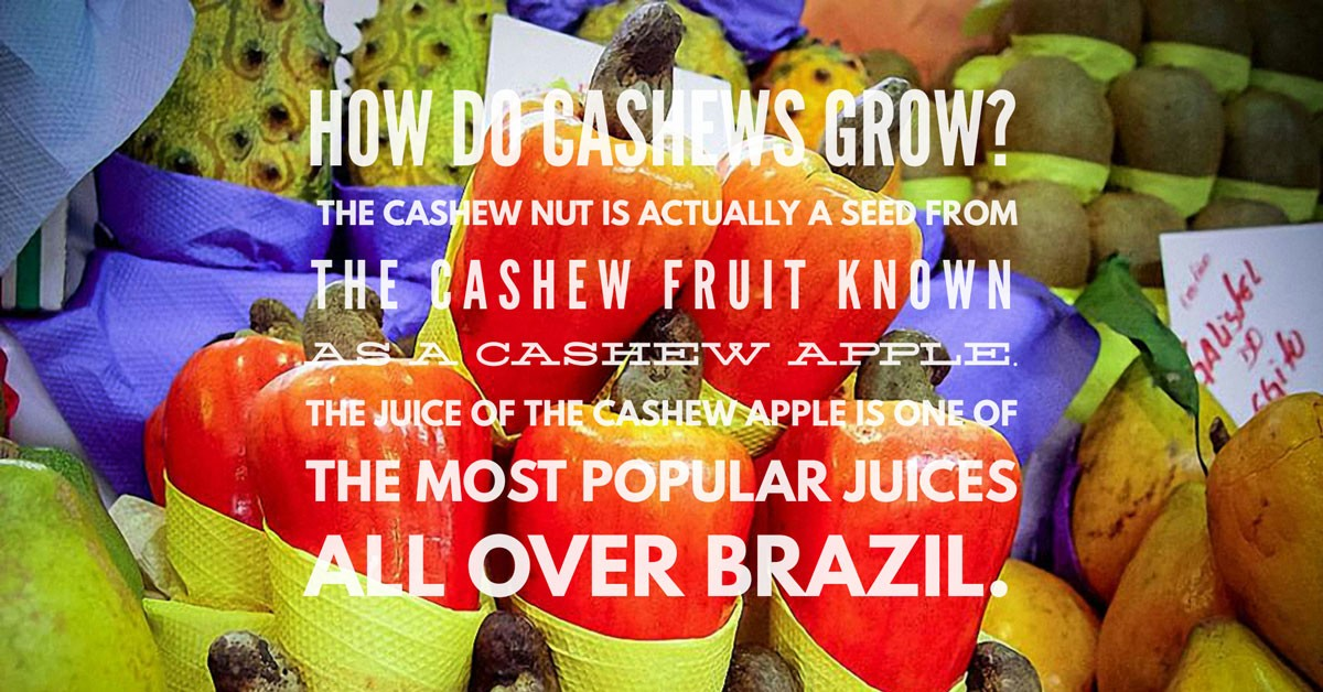 How do cashews grow