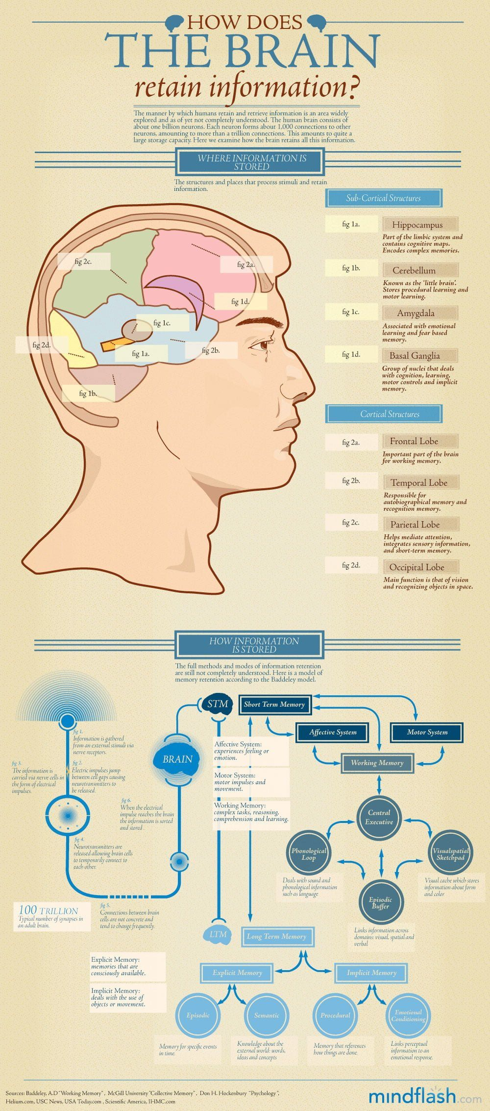 How the Brain Retains Information Infographic