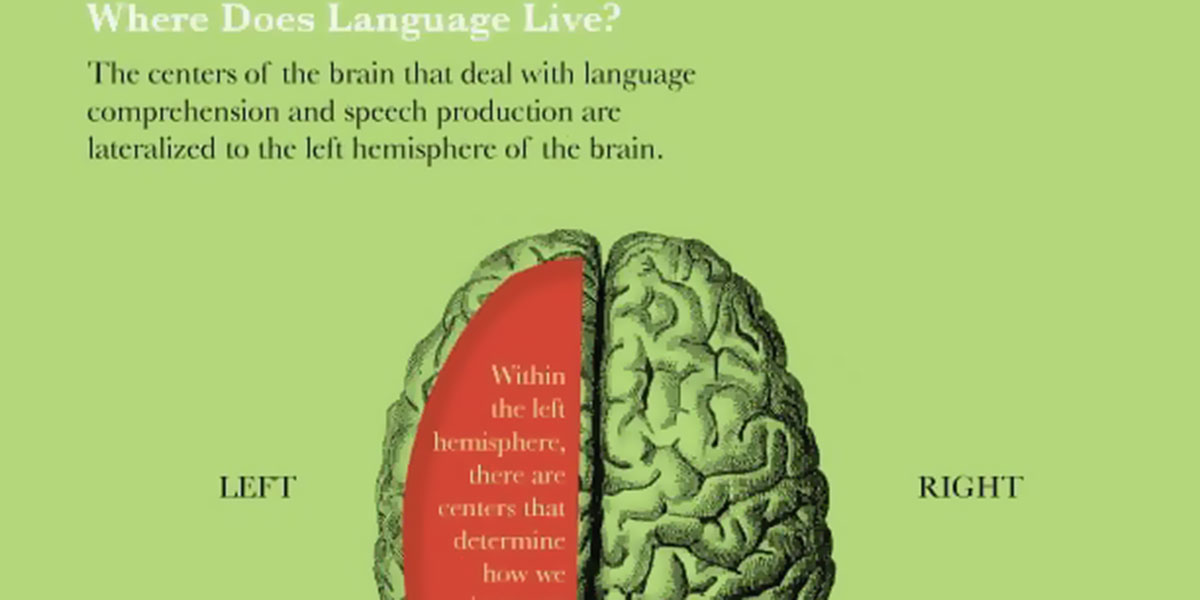 Language And Your Brain Infographic F