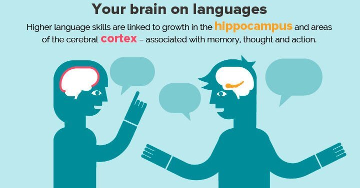 Learning a second language makes you more intelligent
