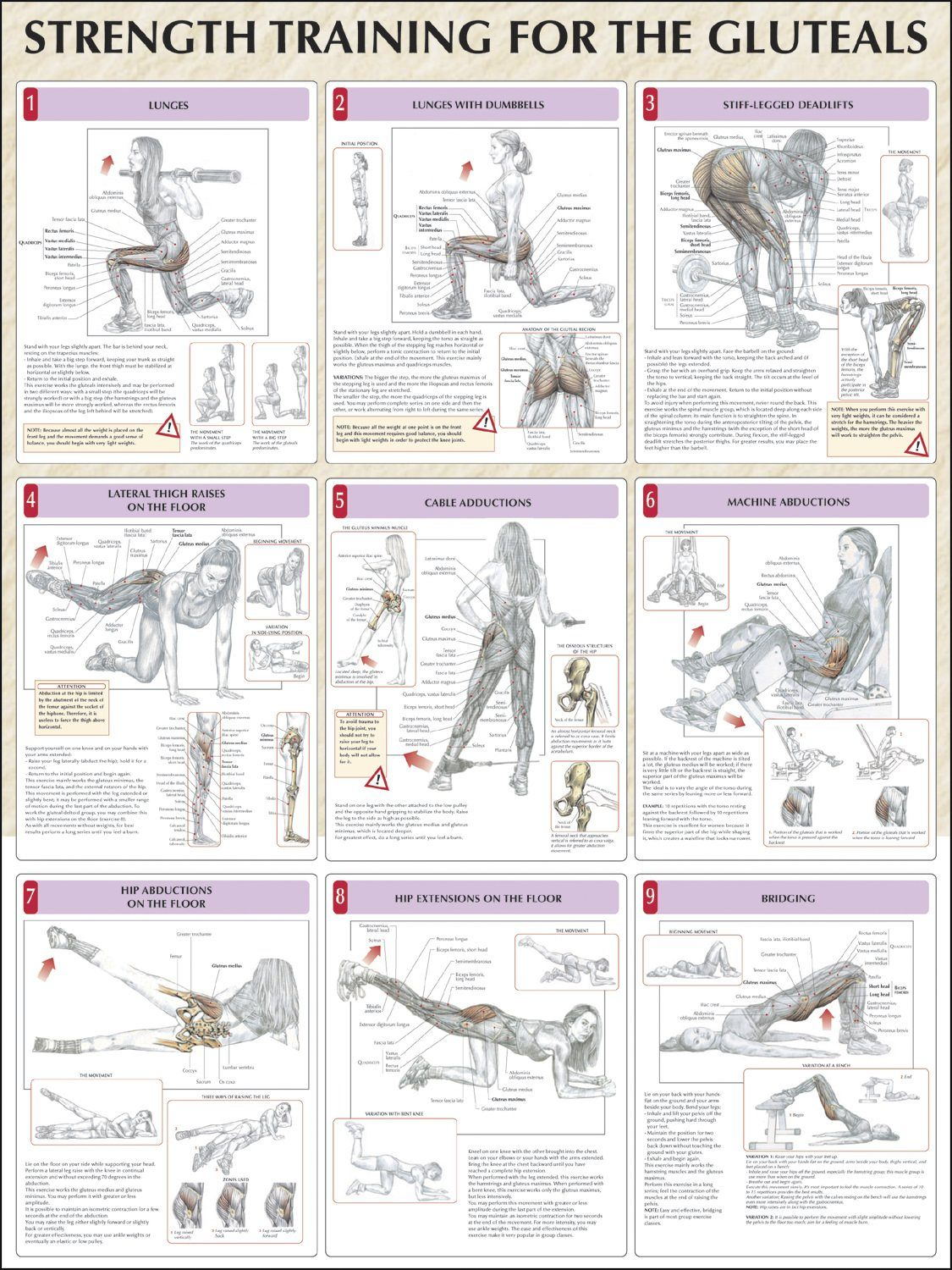 Strength Training For The Glutes Chart
