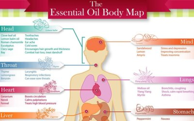 The Essential Oil Body Map Infographic-fl