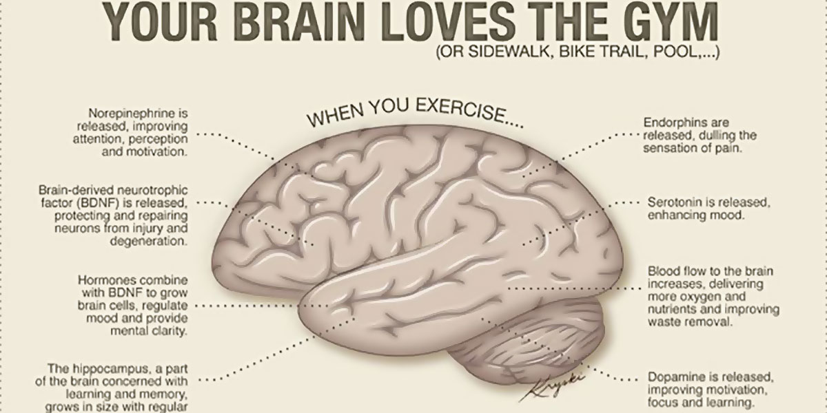 Your Brain Loves The Gym Infographic F