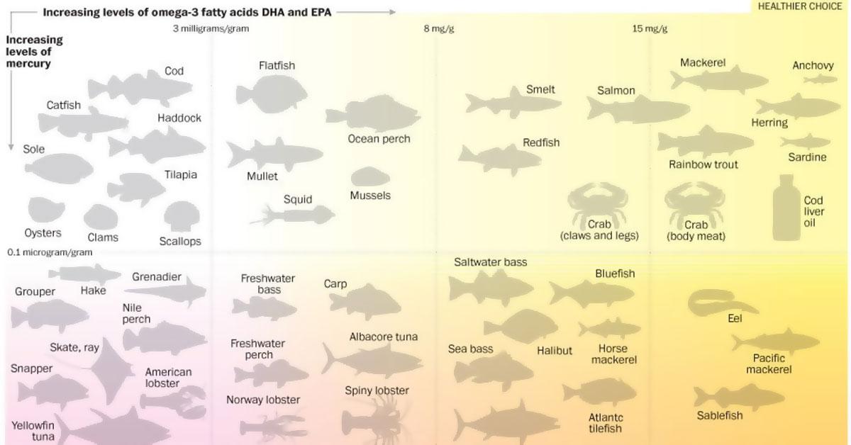 Fish Mercury Infographic3 F