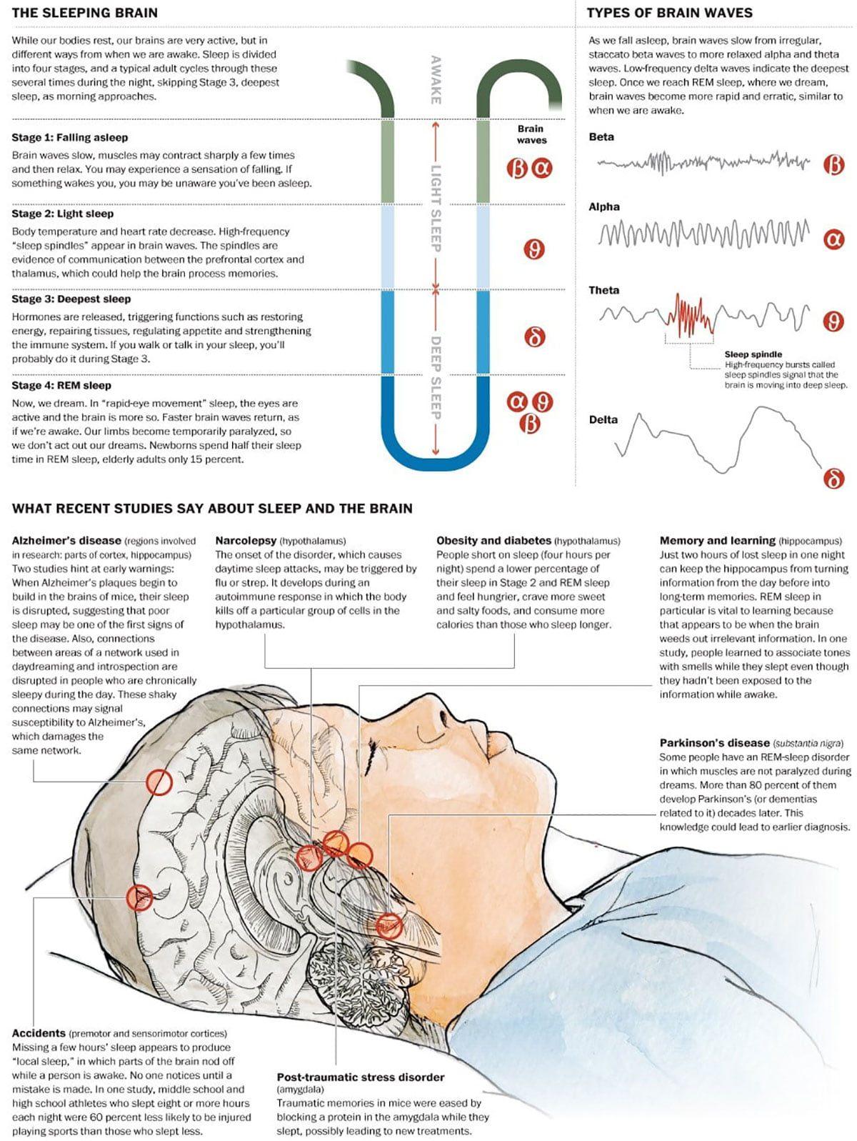Sleep And The Brain